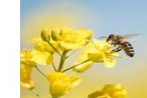 지구상에서 벌들이 사라지면…,